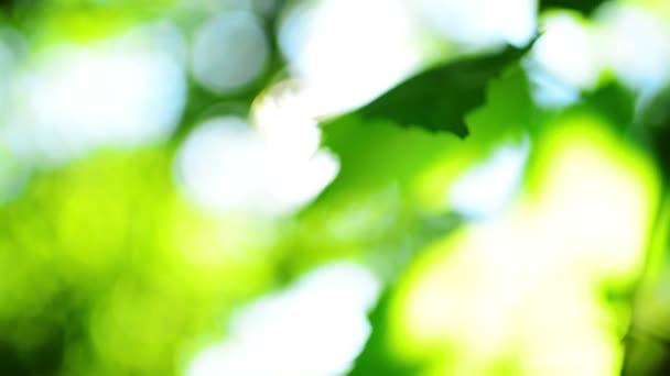 abstraktes Baumwipfel-Bokeh mit Gegenlicht
