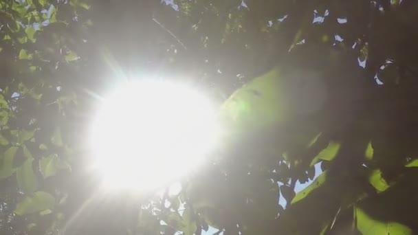 Under the walnut treetop