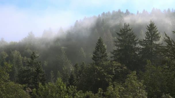 Letní ráno mlha cloud v horském lese