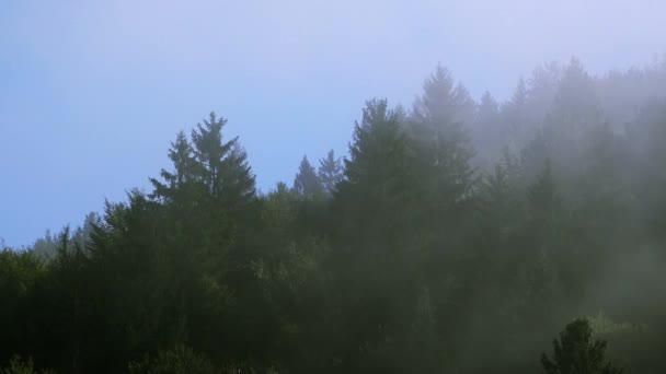Letní dopoledne misty mlha cloud v horském lese