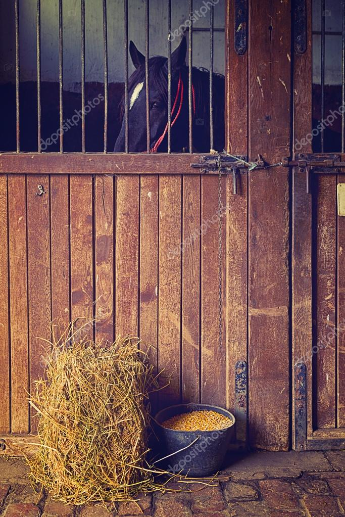 Beautiful Black Horse in the Barn