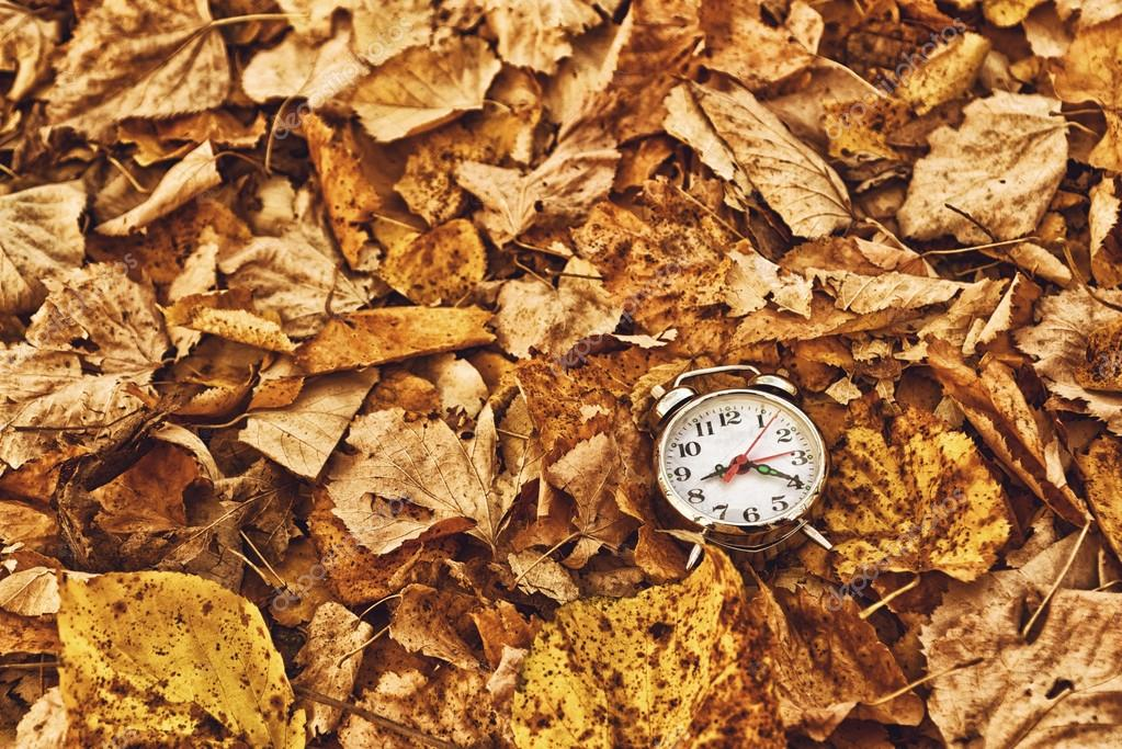Vintage alarm clock in dry autumn leaves