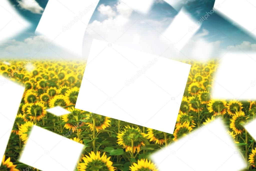 Blank Papers Floating in the Wind in Sunlower Field