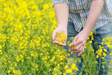 Farmer Standing in Oilseed Rapseed Cultivated Agricultural Field