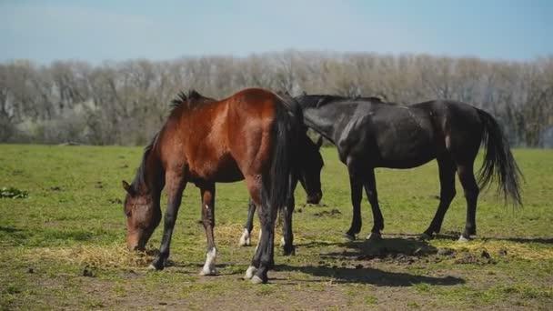 Stádo mladých koní se pasou na ranči farmě zvířat na letní pastviny