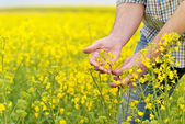 Fotografie Farmer Standing in Oilseed Rapeseed Cultivated Agricultural Fiel