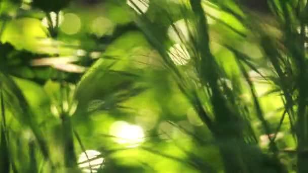 Čerstvé zelené jaro trávníku travní dál vánek v ranní zblízka