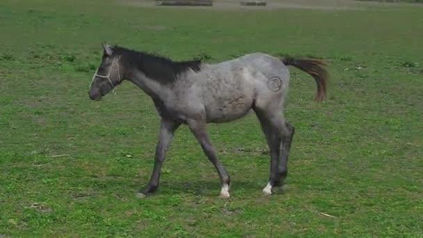 Mladí koně Colt na ranči farmě