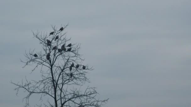 Hejno vyděšené ptáků letící od holé koruny