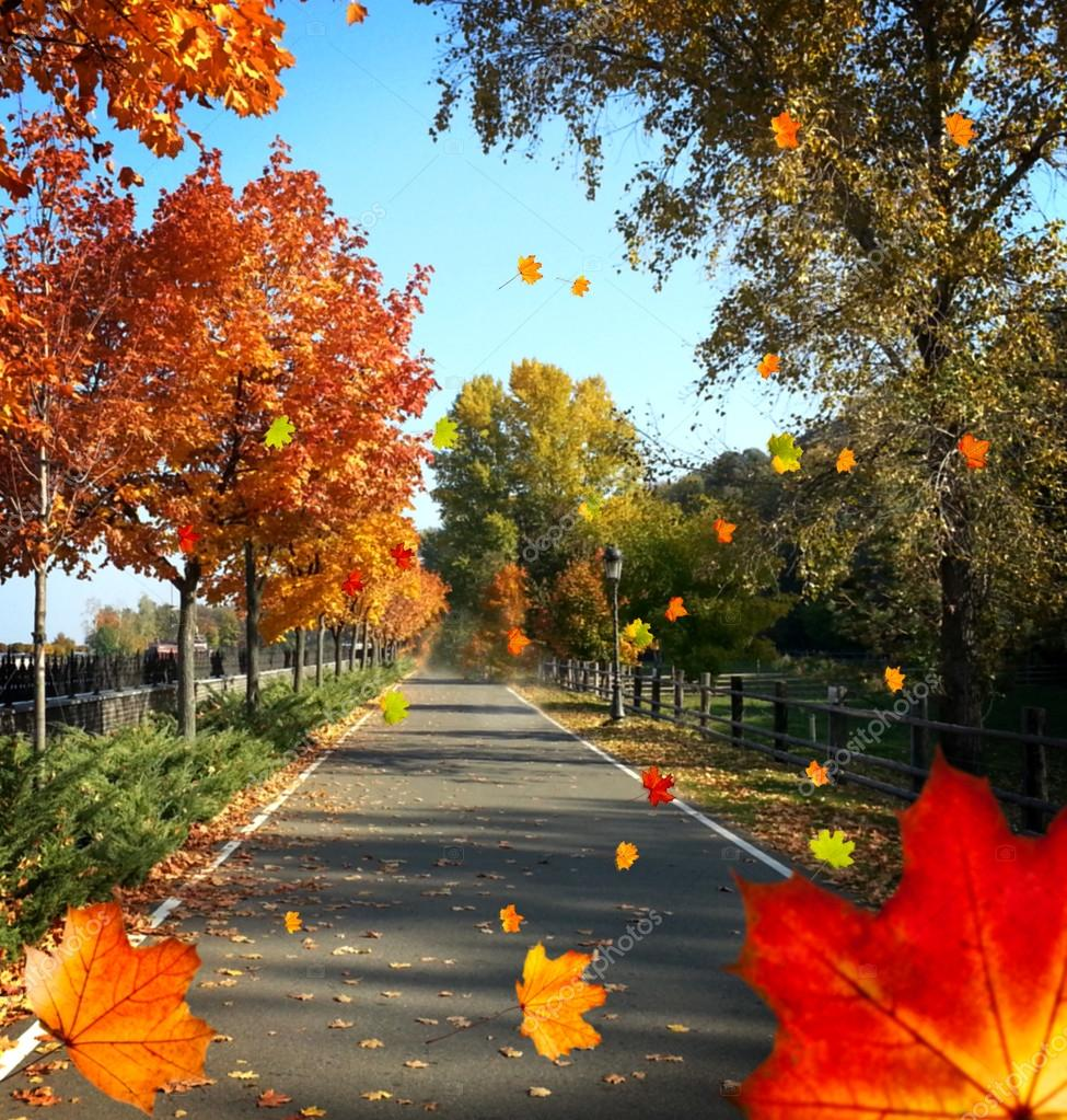 Autumn avenue with trees