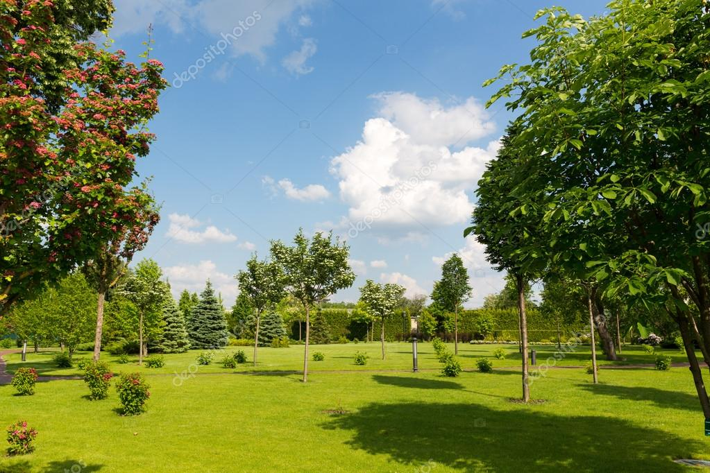 Beautiful green summer park