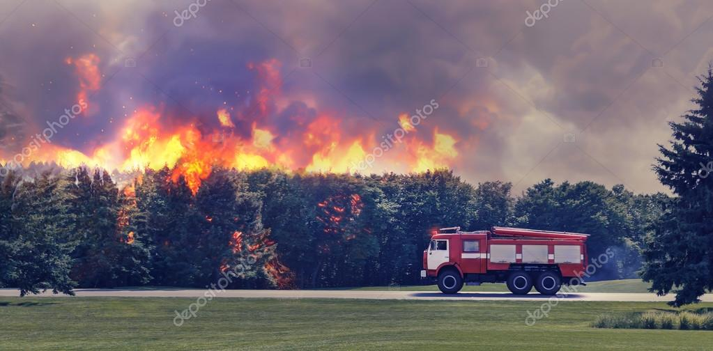 Fire-engine  in the forest
