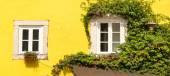 Fotografia Windows ricoperta di edera