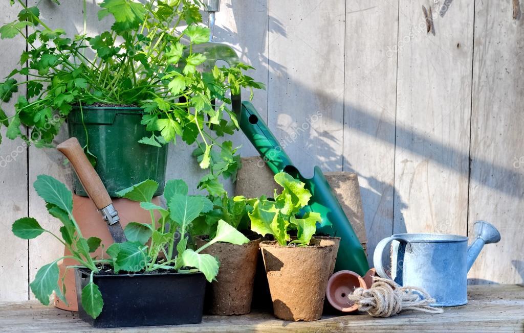 Sadzonki Warzyw W Doniczkach Zdjęcie Stockowe
