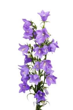 Bouquet of hand bells