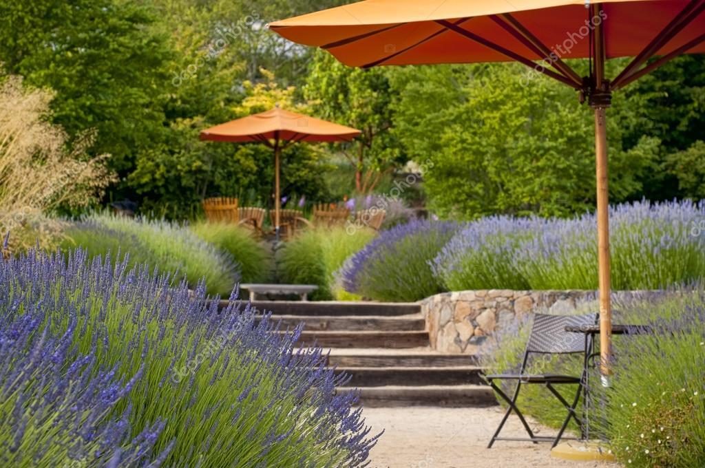 Lavender Garden In Bloom U2014 Stock Photo
