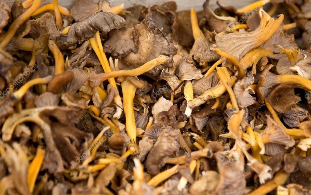 Horn of plenty mushroom