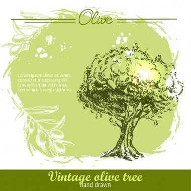 Vintage hand drawn olive tree and olive branch