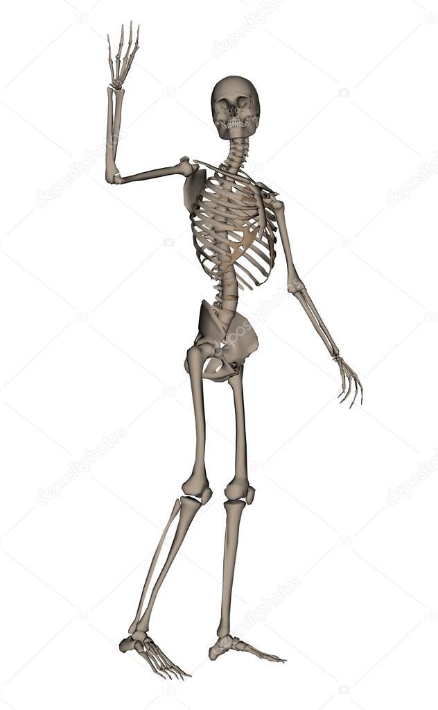 Esqueleto humano diciendo: render 3d de adiós — Fotos de Stock ...