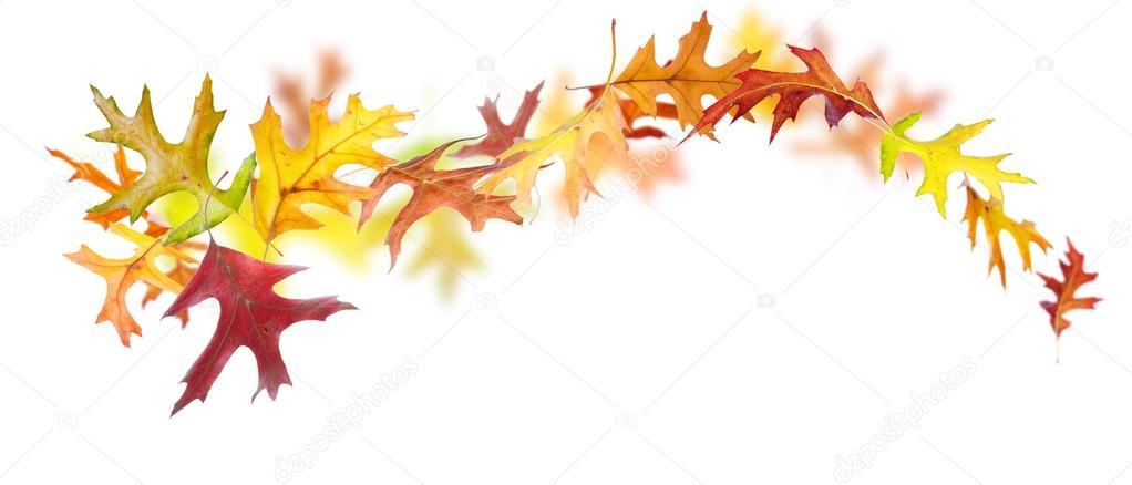 tourbillon de feuilles d 39 automne photographie dibrova. Black Bedroom Furniture Sets. Home Design Ideas