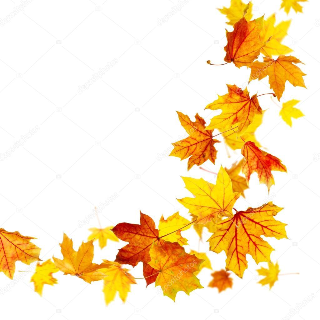 Hojas de oto o fotos de stock dibrova 52289255 - Descargar autumn leaves ...