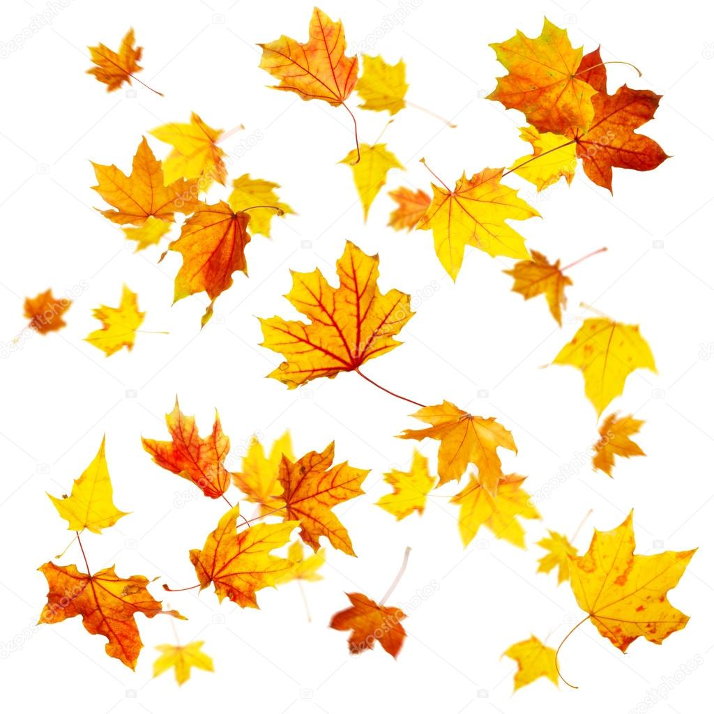 hojas de oto u00f1o volando foto de stock  u00a9 dibrova 52370007 leaves clip art black leaves clip art sheet