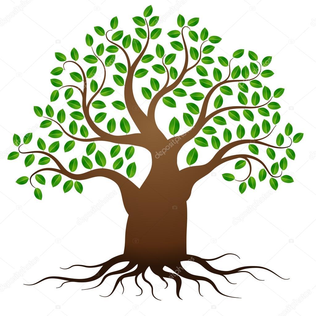 Arbre Avec Racine arbre vectoriel vert avec des racines — image vectorielle dibrova