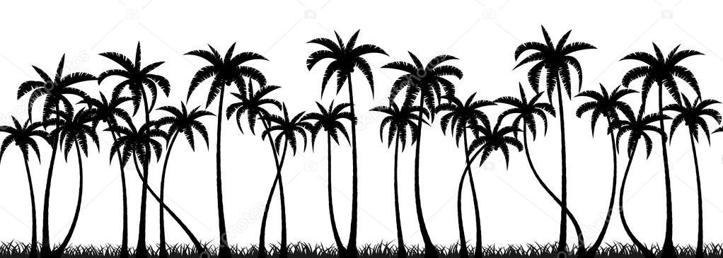 Palms grove silhouette