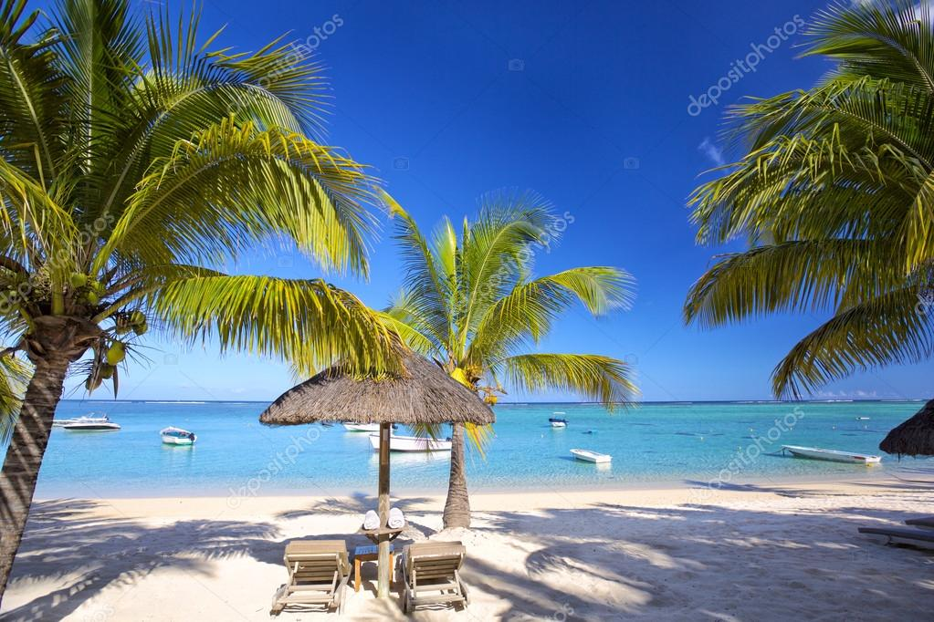 Mauritius palm beach