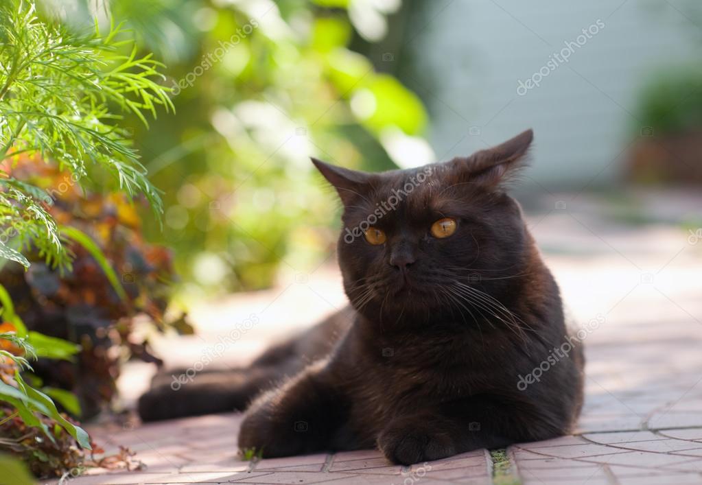 a8ce8ab8acf70 Lindo gato preto deitado no tapete na sombra — Fotografia por melektaus