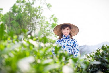 asian girl picking tea leaf