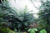 Fotografia Cespuglio di alberi nella foresta