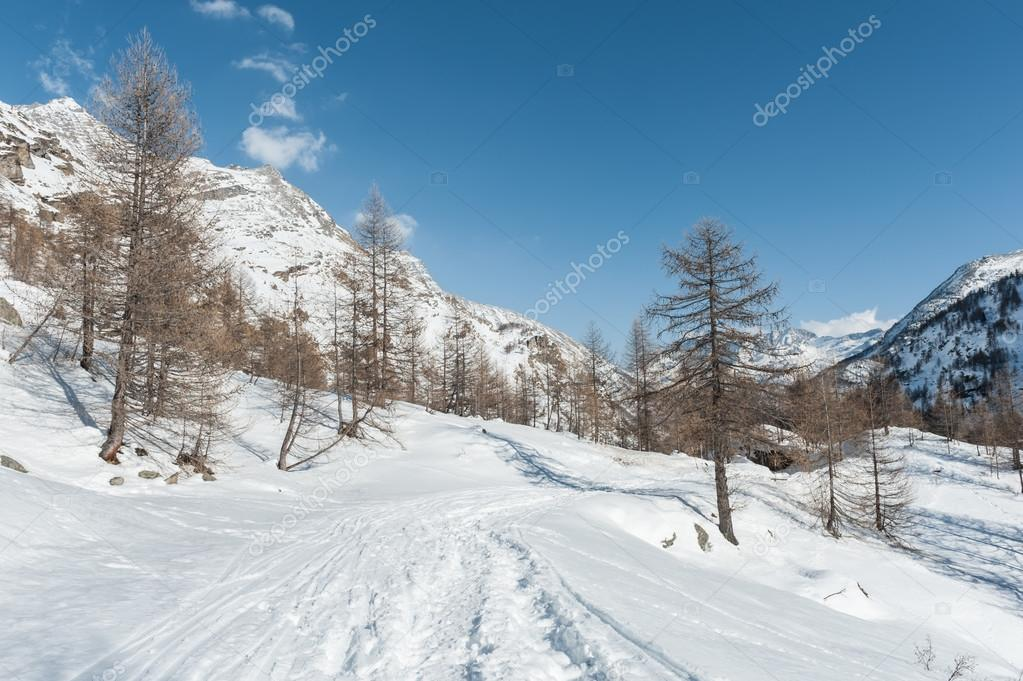 Alps mountain in winter