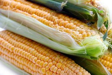 the beautiful ripe corn