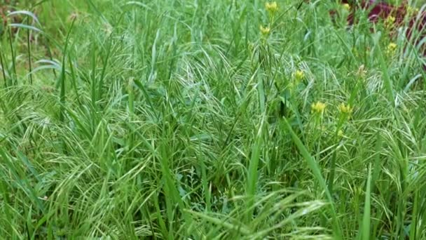 beautiful green grass on a high mountain meadow as a symbol of purity