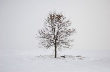 Winter lonely tree