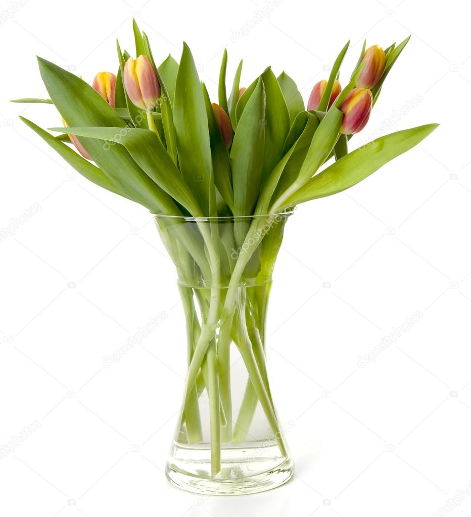 Bouquet of dutch tulips in vase stock photo sannie32 96962190 bouquet of dutch tulips in vase over white background photo by sannie32 reviewsmspy