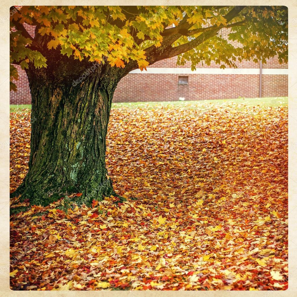Herbst Baum Instagram Stil Stockfoto C J0ycem 53752695