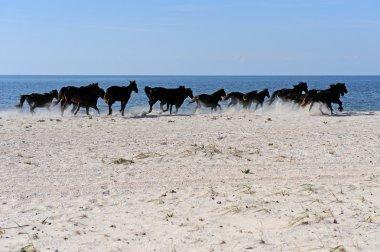 Horses on the coast in autumn