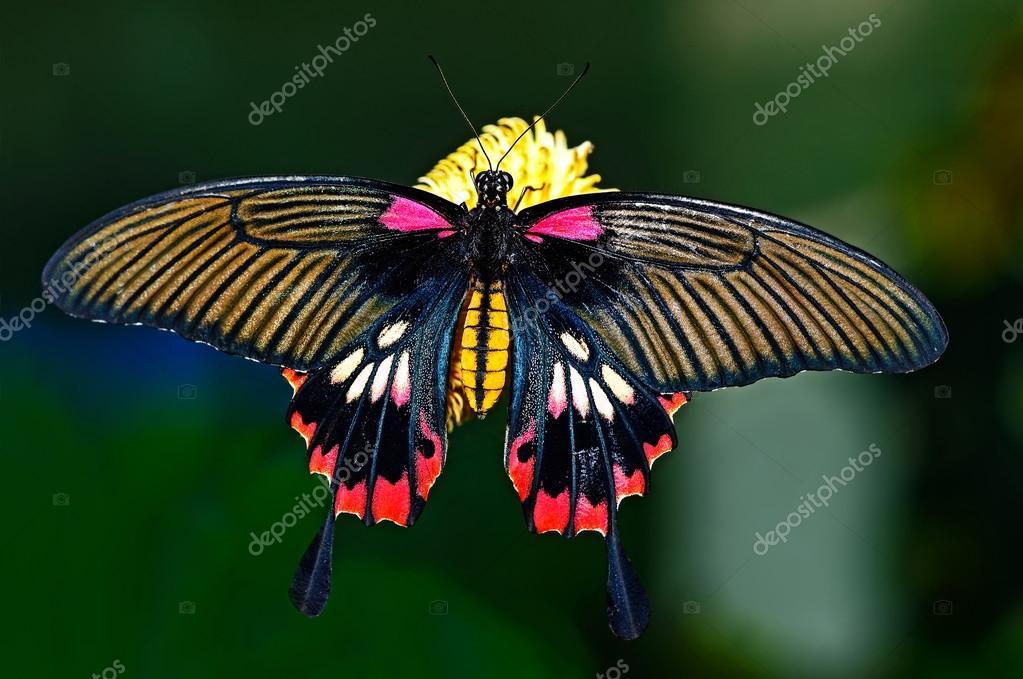 Monde de papillon photographie kyslynskyy 75139111 - Images de papillon ...