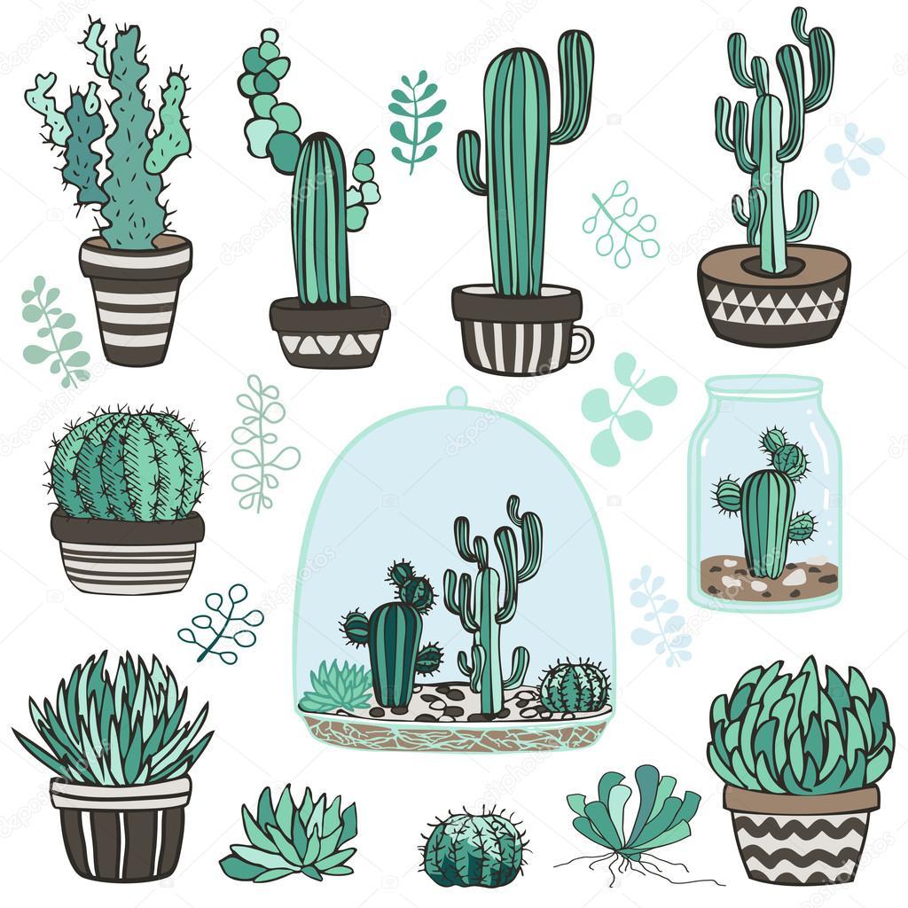 succulente plants