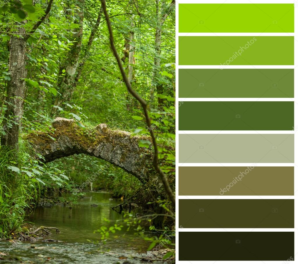 Forest stream, color code