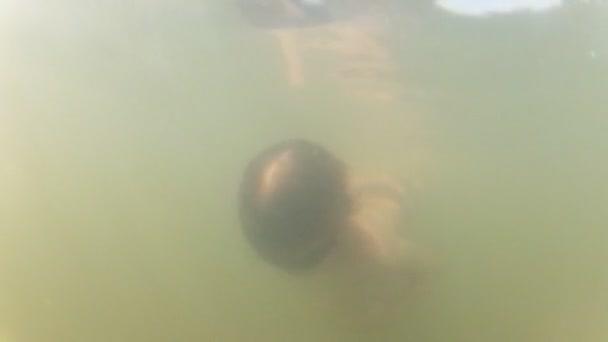 Junge taucht unter Wasser
