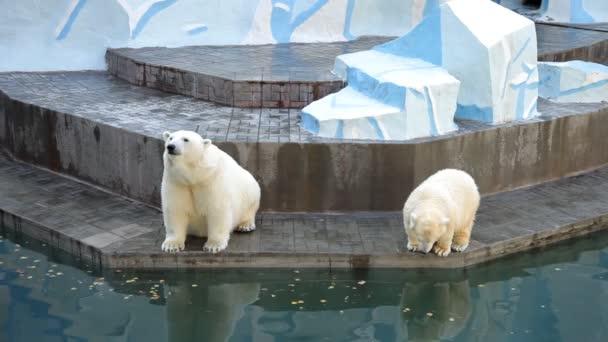 Polar bear cub with mother