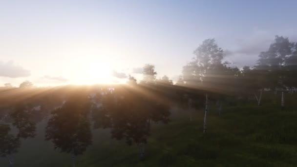 Slunce svítí přes březový háj