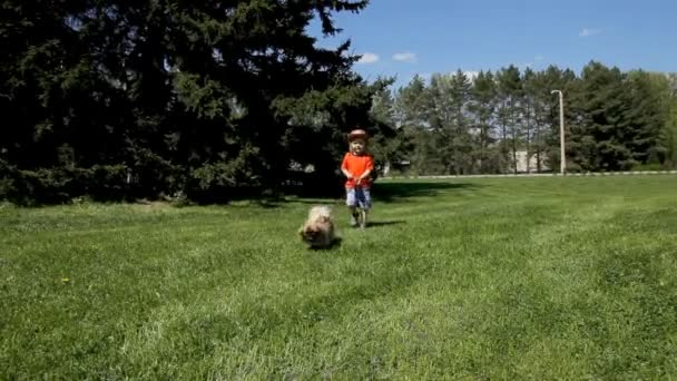 little child boy walking with dog in spring park