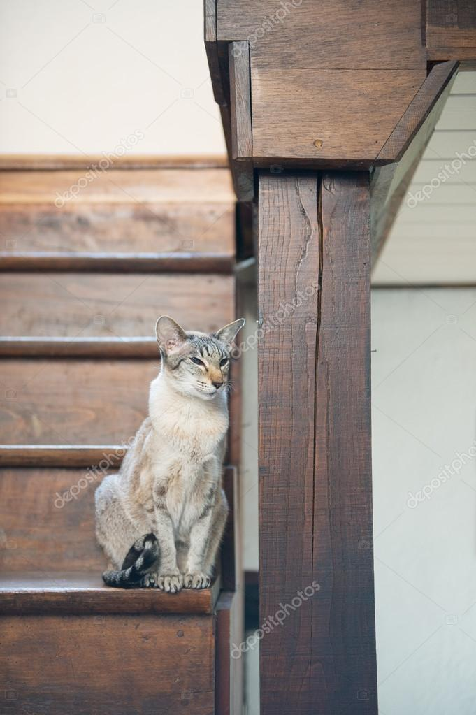 Siamese Cat On Wooden Staircase U2014 Stock Photo