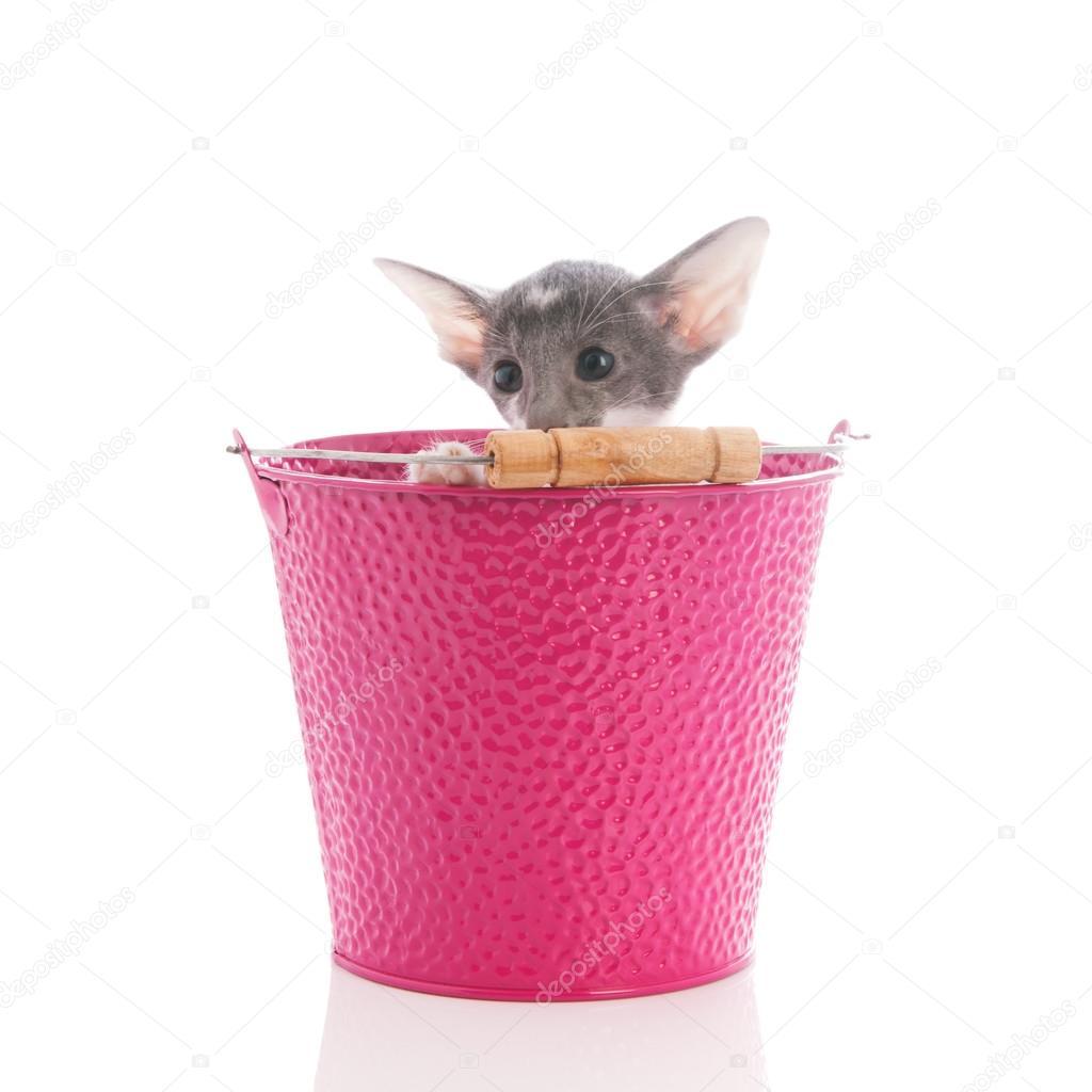 Μεγάλο ροζ μουνί φωτογραφίες