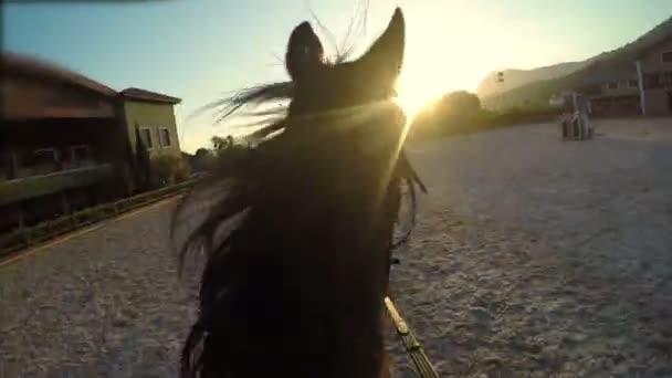 skákání překážkový kůň