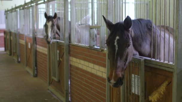 Krásné koně ve stáji